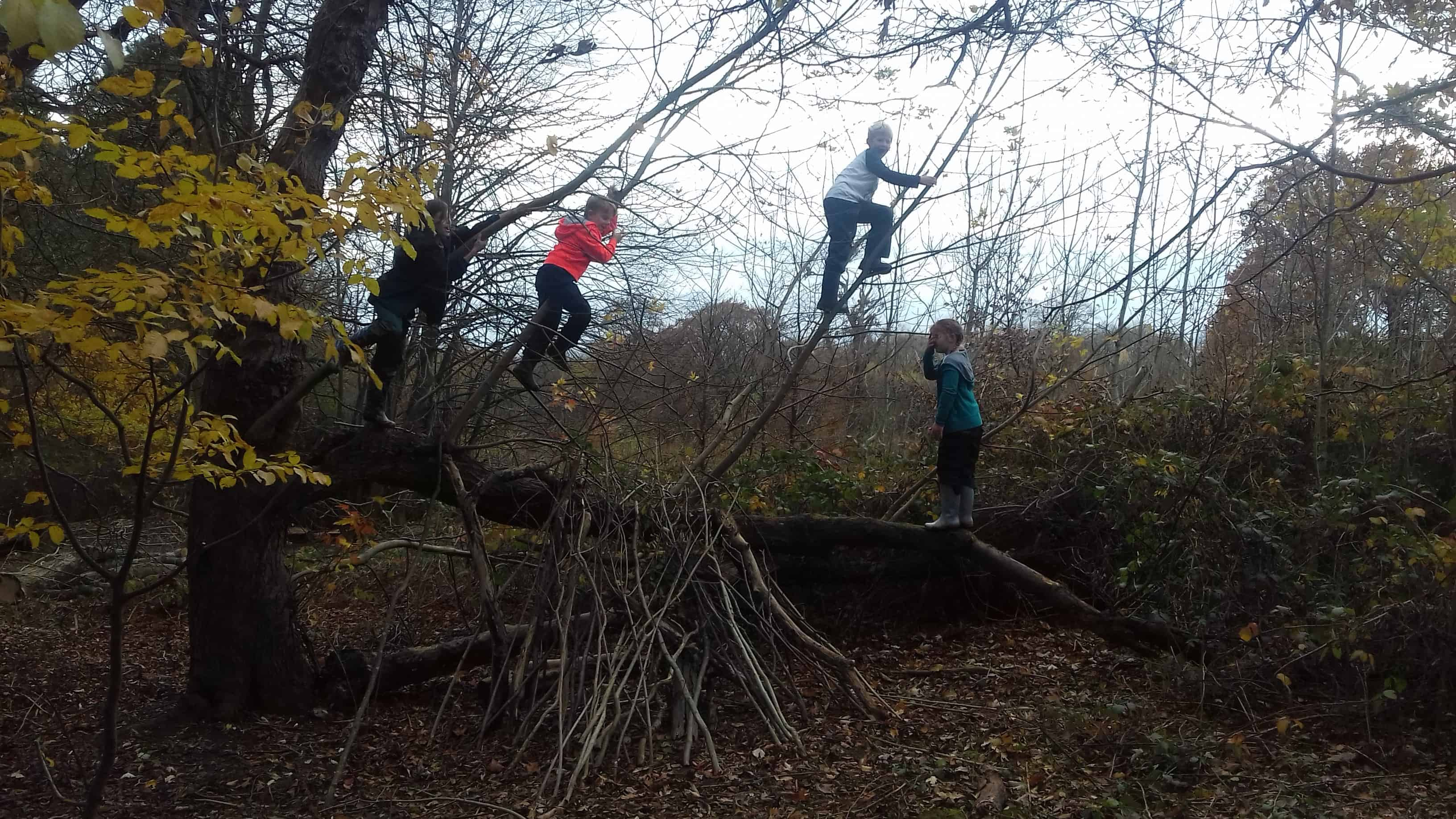 Year 4 enjoying Forest School